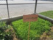 أنشطة مشروع الحدائق التربوية بقطاع غزة